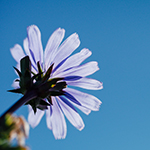 erin_bio_flowerpic_150